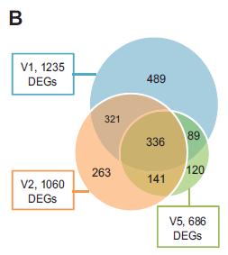Espressione genica nella malattia di Lyme: Lupus oME/CFS?