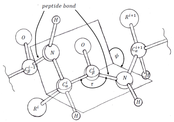 dihedral-angle-psi-2