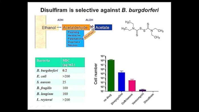 Nuovi farmaci contro le forme persistenti di Borreliaburgdorferi