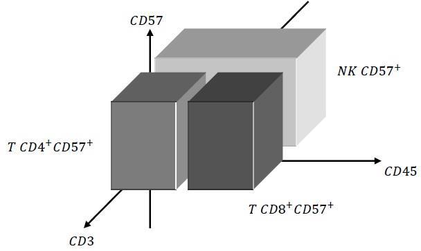 La conta delle NK CD57+ nelle malattie autoimmuni, nella ME/CFS e nella malattia diLyme