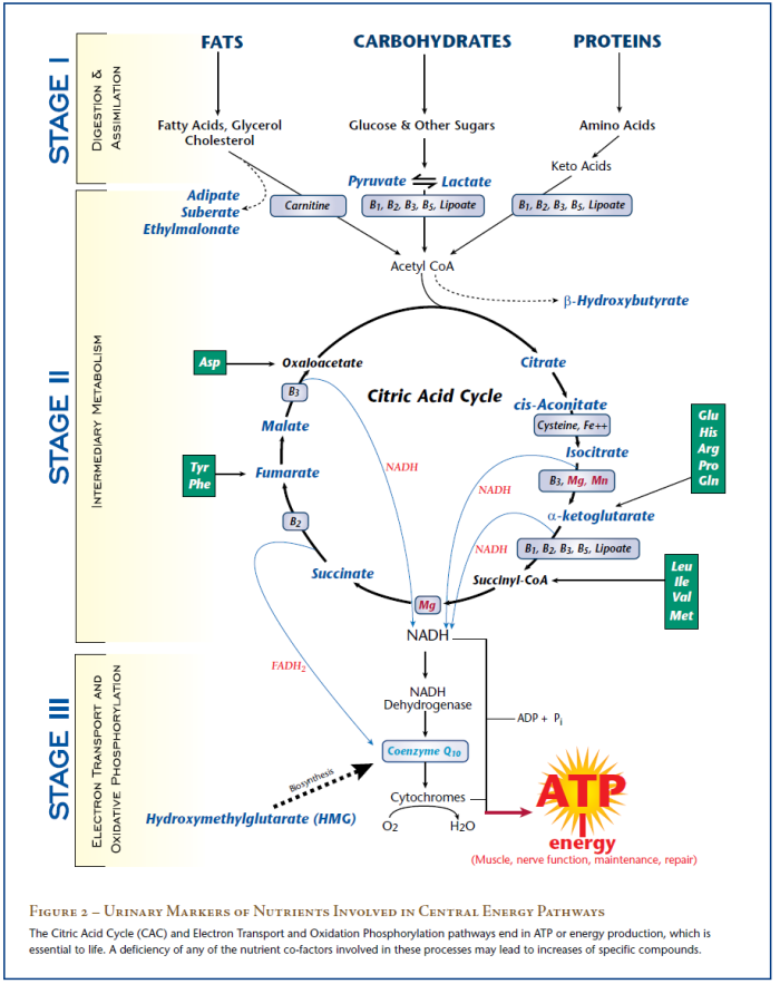 Test metabolomici