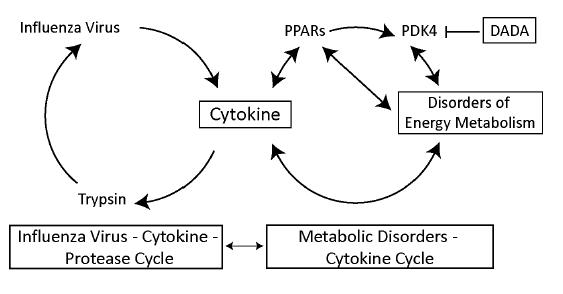 immunometabolismo