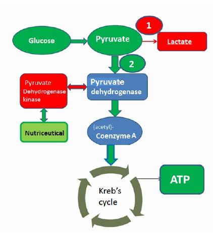 glucose test.jpg
