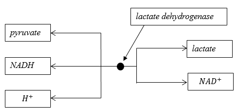 lactate dehydrogenase.PNG