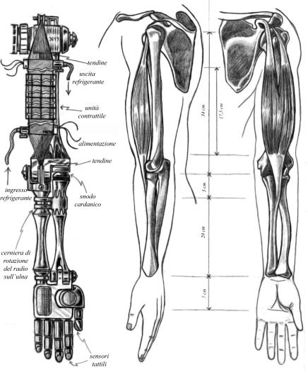 Bionica3.jpg